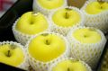 はるかりんごお歳暮通販 岩手県産 はるか林檎販売 糖度14度以上!形状・蜜入度数は低いですが味は抜群です。中箱 約7玉〜約9玉