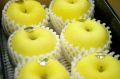 お歳暮はるかりんご販売 岩手県産 はるか糖度14度以上通販 形状・蜜入度数は低いですが味は抜群です。小箱 約5玉〜約6玉