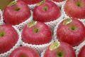 樹上完熟ふじりんご取寄販売 東根市お歳暮サンふじりんご糖度約14度を通販で。約5kg 約14玉〜約20玉 山形県東根市産