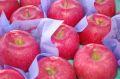 弘前ふじりんご(夢ひかり)取寄販売 青森の糖度約13度のりんごを通販で。約5kg 約14玉~約18玉 青森県産