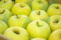 お歳暮星の金貨りんご取寄販売 青森まるかじりりんごを通販で。約5kg 約14玉~約18玉 青森・他産地