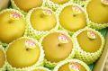 新潟豊水取寄販売  しろね地区糖度約13度の和梨を通販で果物ギフトに。一糖賞・糖鮮確実  約5kg 10玉~16玉 新潟産