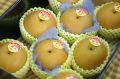新潟豊水通信販売  しろね地区糖度約13度の和梨を通販で取寄。一糖賞・糖鮮確実 中箱 約7玉~9玉 新潟産