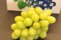 ジュエルマスカット葡萄通販 種なし皮ごと食べられるぶどうを販売取寄。1房 約550g