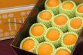 ミニサイズでお買い得!甘平(かんぺい)通販 愛媛産プチプチした食感が特徴の柑橘を販売取寄。約16玉前後 愛媛産
