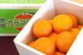 カラマンダリンオレンジ通販 春みかんと呼ばれるカラーを販売取寄。約2kg S〜2L 愛媛県産