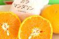 カラマンダリンオレンジ販売 カラーオレンジを御中元果物に。約5kg L 約40玉 愛媛県産