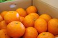 カラーオレンジ 約2kg  【三重・他産地】