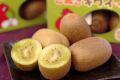 さぬきキウイっこキウイフルーツ販売 香川県産 通販お取り寄せ 約7玉〜約15玉×3箱