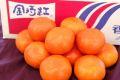 金時紅みかん販売 お歳暮香川県蜜柑。小原紅早生は果皮・果肉も紅色 糖度11・5度以上 約2・5kg