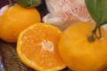 紀の里袋掛けみかん販売 和歌山の木成り完熟みかんを通販で取寄せ。約3kg 約30玉~約50玉※御歳暮には不向きです※御年賀みかん