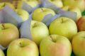 トキりんご取寄販売 奇跡の出会いで誕生した青りんごを通販で。約5kg 約14玉~約18玉 青森・長野・他産地