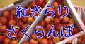 紅きらりさくらんぼ販売。通信販売で山形県産 幻の桜桃お取り寄せ!1kg L〜3L