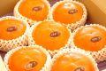 輝太郎柿(きたろうがき)通販 鳥取県の早生柿で大玉品種を販売 約7玉〜約9玉
