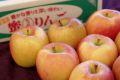 こみつりんご販売 蜜入お歳暮林檎を通販。品種名 高徳こうとく 青森県産 約6玉〜約12玉