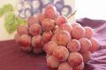 クイーンニーナ葡萄通信販売 大粒で種が無く高糖度な赤色系ぶどうを取寄。 2房 山梨・他産地