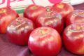 紅の夢りんご販売(果肉が赤いリンゴ通販) 料理加工用に取寄せ!パティシエ製菓店御用達の林檎ご品種 11月上旬頃 中箱 約7玉~約9玉 若干傷ありサイズ混合