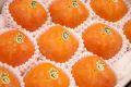 紀の川柿黒あま通販 和歌山オリジナルの果肉がゴマ色の柿を販売取寄。約3・5kg 約12玉〜約15玉 和歌山産