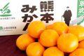 草枕みかん販売 お歳暮熊本みかん通販にJAたまな蜜柑をお取り寄せ 糖度12度以上 5kg S〜L