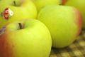 山形県産ぐんま名月りんご販売 隠れた銘品種林檎を通販お取り寄せ 中箱 約7玉〜約9玉