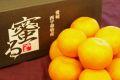 蜜るみかん販売 愛媛県JA西宇和みつる共選 お歳暮みかん通販でお取り寄せ 4kg S~L
