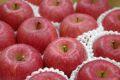 長野ふじりんごお取り寄せ販売 信州サンふじお歳暮ギフト通販 糖度約13度 5kg 約14玉〜約18玉