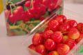 南陽さくらんぼ通販。山形さくらんぼ販売で取寄!大粒桜桃で独特の芳香 500g バラ詰め L~3L