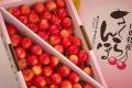 南陽さくらんぼ通信販売。山形さくらんぼ販売で取寄!大粒桜桃で独特の芳香 1kgバラ詰め L〜3L