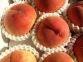 新潟の桃!糖度12度以上 5kg 約13玉~約18玉【新潟県産】