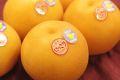 にっこり梨 等級「自信作」通販 糖度13度以上 栃木オリジナルの大玉系和梨を販売取寄。約3kg 約3玉~約5玉 栃木産