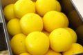 ニューサマーオレンジ通信販売 小夏・日向夏とも呼ばれる柑橘を販売取寄。約3kg 愛媛・他産地