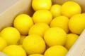 ニューサマーオレンジ取寄販売 小夏・日向夏とも呼ばれる柑橘を通販で。約5kg 愛媛・他産地