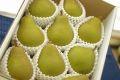 西洋梨オーロラ通信販売 山形県の初秋に味わえる西洋梨を販売取寄。中箱 約7玉~約9玉 山形産
