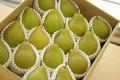西洋梨オーロラ取寄販売 山形県の初秋に味わえる西洋梨を通販で。約5kg 約12玉~約16玉 山形産