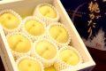 冬桃がたり通販 岡山の桃!お歳暮ギフト販売 お取り寄せに 11月下旬頃から12月上旬 化粧箱 約5玉〜約6玉