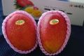 美ら芒果(マンゴー)沖縄最高級ブランドマンゴー 【沖縄県産】