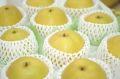 王秋梨(おうしゅうなし)通販 鳥取の初冬に味わえる糖度約12度の和梨を販売取寄。約5kg 約8玉~約12玉 鳥取産