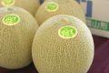 パンナメロン通販 庄内砂丘地の高糖度メロン通信販売 山形県 約5kg 3玉~5玉