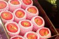 シナノプッチりんご長野県産の小さな林檎。約12玉~約15玉