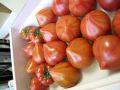 フルーツトマト♪麗(れい) 糖度9度以上! 約20個~約30個 【愛知県産】