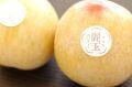 麗玉れいぎょく 長野県 すもも李 糖度18度 品種シナノパール 1玉200g以上 3玉入