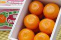 麗紅柑れいこうかん通販 せとかと同じ交配品種の柑橘を販売取寄。小箱 愛知・他産地