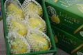 お歳暮ルレクチェ通販 新潟県特産の西洋梨レクチェを販売取寄。約3kg 約7玉~約9玉