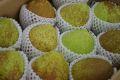 ゼネラルレクラーク取寄販売 山形西洋梨でサビが特徴の洋梨を通販で。約5kg 約7玉~約16玉