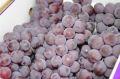 レッドナイアガラ葡萄通販 山形産。希少なナイアガラぶどうを販売取寄。約2kg 約5房~約9房