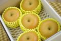 南水梨通販 太鼓判・下伊那園芸・三石農園糖度約14度の和梨を販売取寄。小箱 約5玉〜約6玉 長野産