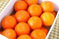 セミノールオレンジ取寄販売 爽やかなオレンジの香りが特徴の春みかんを通販で。約5kg 和歌山・他産地