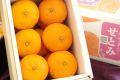 柑橘せとみ通販 糖度12度山口県オリジナル品種せとみを通販で取寄。約2kg 約8玉~約12玉 山口県産
