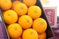 柑橘せとみ通販 糖度12度山口県オリジナル品種せとみを通販で取寄。約3k 約15玉〜約23玉 山口県産
