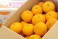柑橘せとみ通販 糖度12度山口県オリジナル品種せとみを通販で取寄。約5kg 山口県産